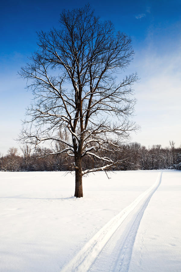 perfumowania gorący snowmobile zdjęcie royalty free