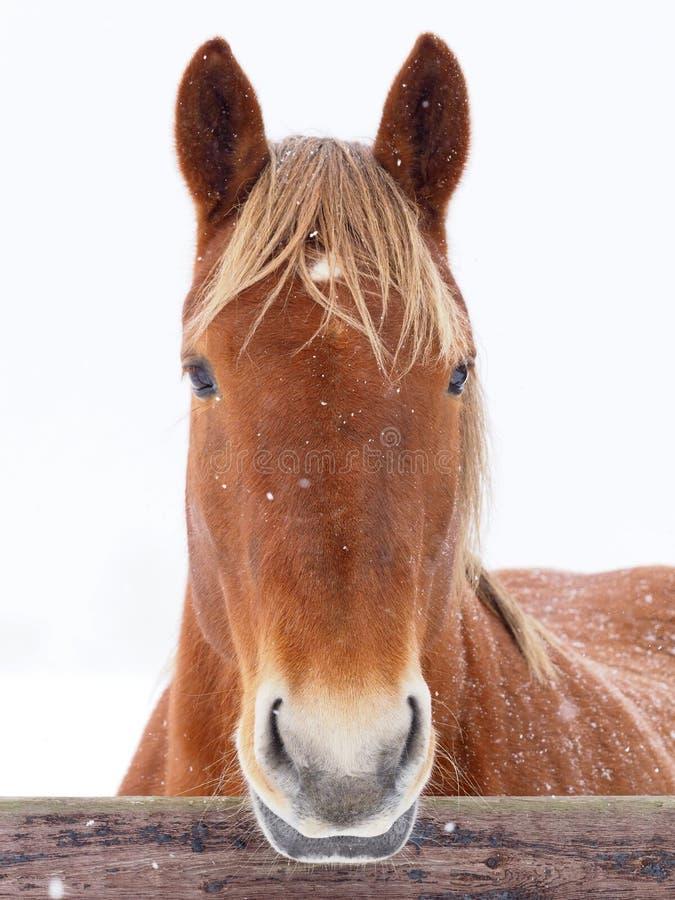 Perfurador do Suffolk no inverno fotos de stock