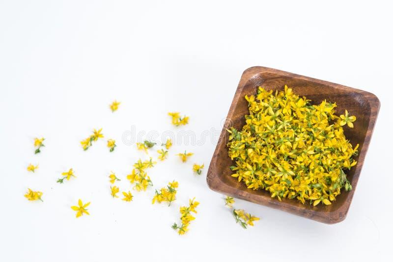 Perfure o St John-wort é planta muito rara e saudável fotos de stock