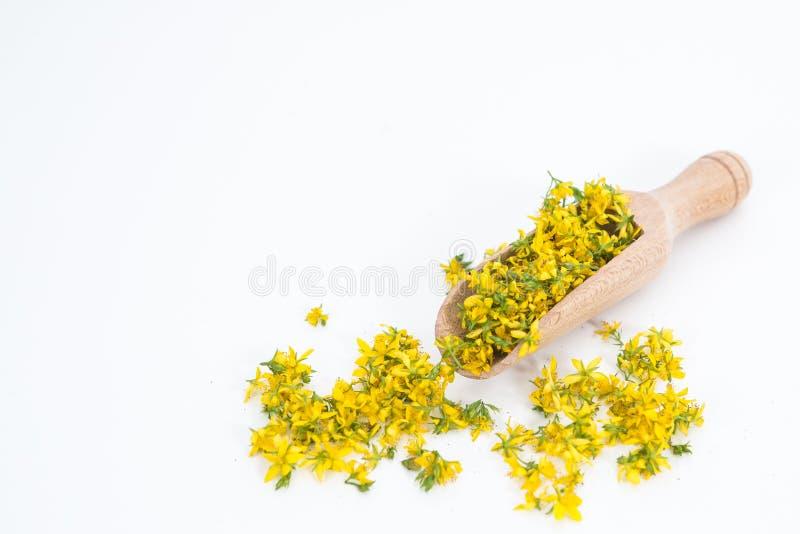 Perfure o St John-wort é planta muito rara e saudável fotografia de stock