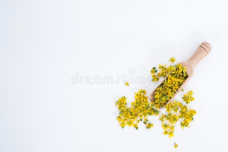 Perfure o St John-wort é planta muito rara e saudável foto de stock royalty free