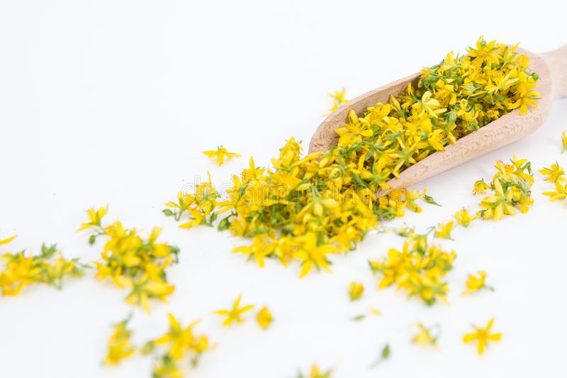 Perfure o St John-wort é planta muito rara e saudável imagens de stock