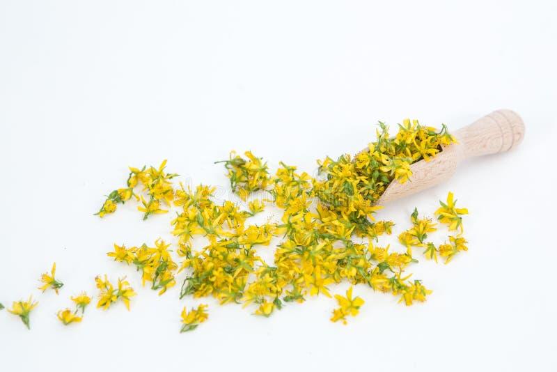Perfure o St John-wort é planta muito rara e saudável fotos de stock royalty free