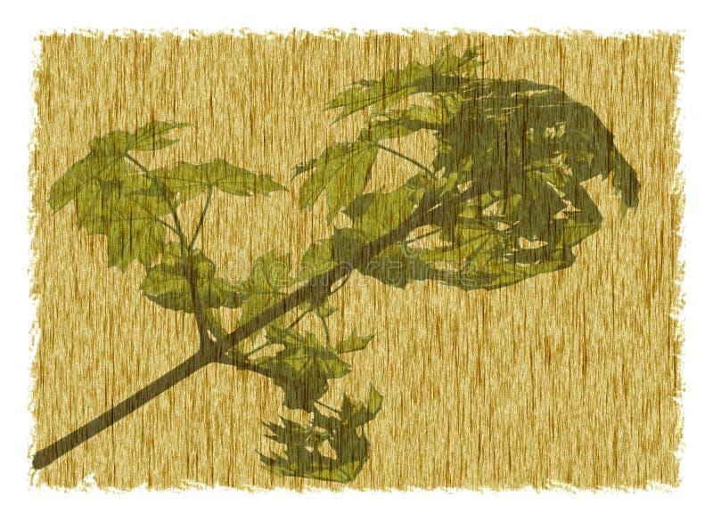 Pergament des natürlichen Frühlinges vektor abbildung