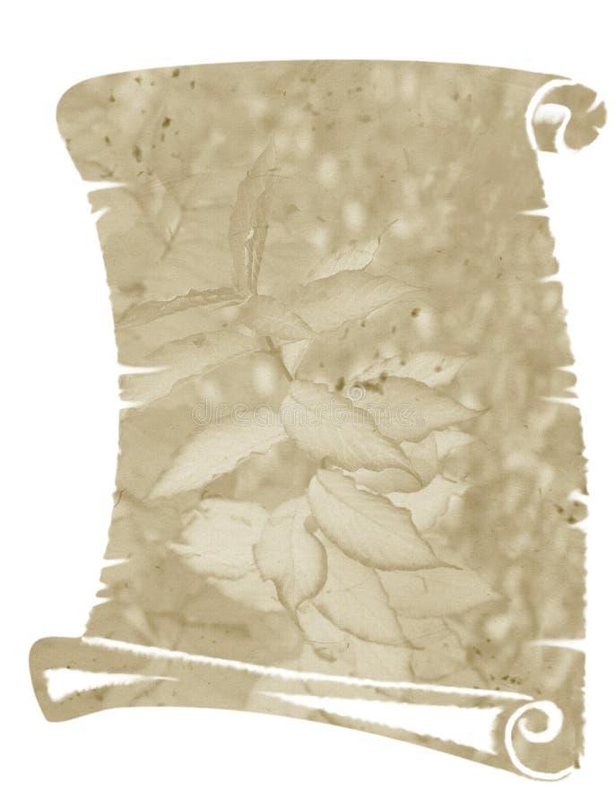 Pergaminho velho da ilustração ilustração do vetor