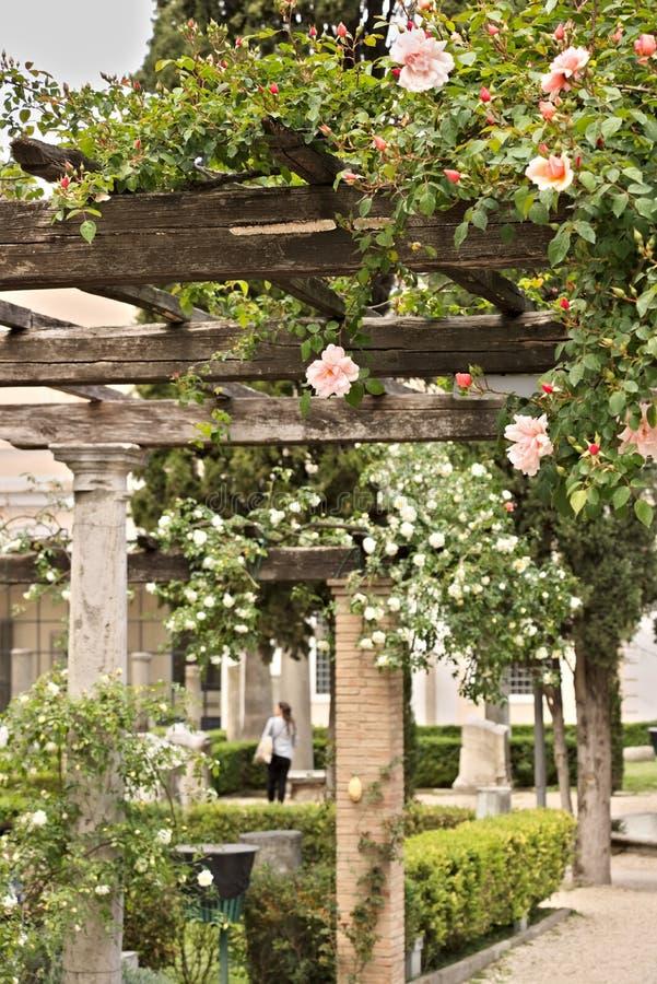 Pergola av vita och rosa rosor på trästråle arkivbild