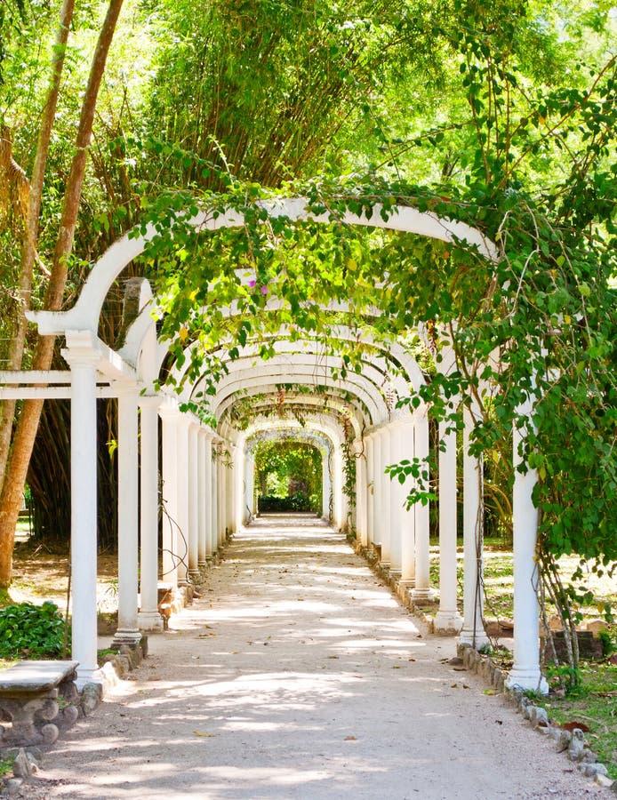 Pergola in Botanische Tuin in Rio de Janeiro royalty-vrije stock foto