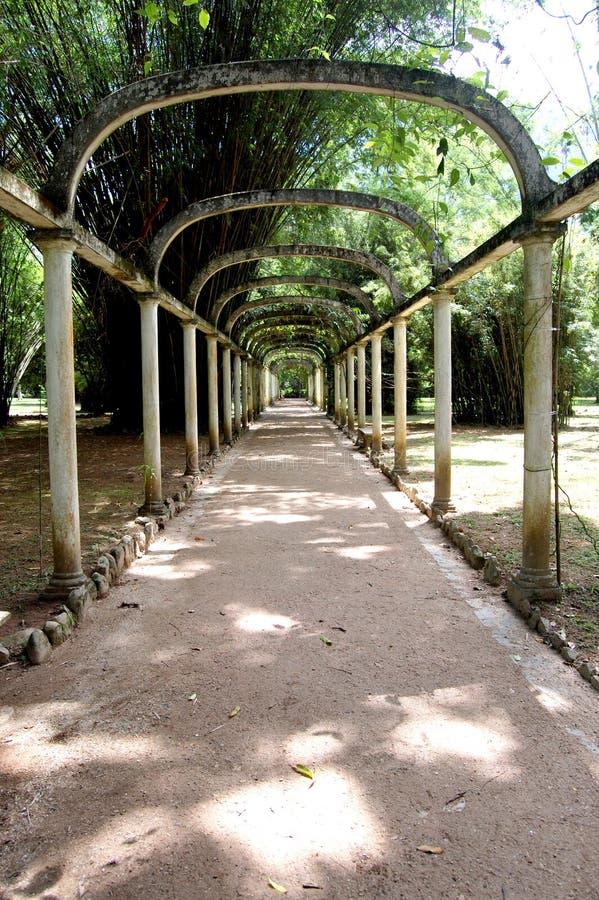 Pergola am botanischen Garten stockfotos