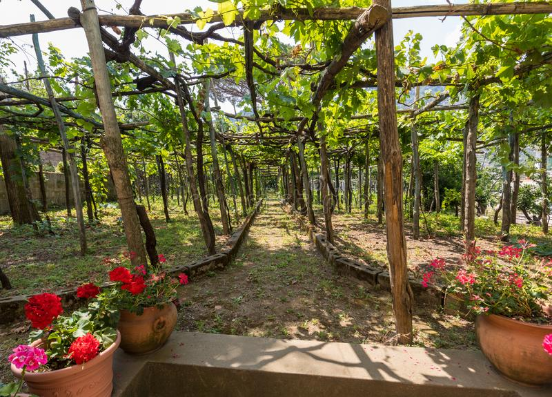 Pergola covered with vines, providing shade on hot days in Ravello, Amalfi Coast royalty free stock photos