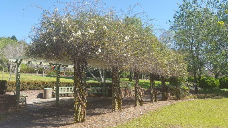 pergola de bois de construction pergola de vigne photo stock image du fleur vigne 76834894. Black Bedroom Furniture Sets. Home Design Ideas
