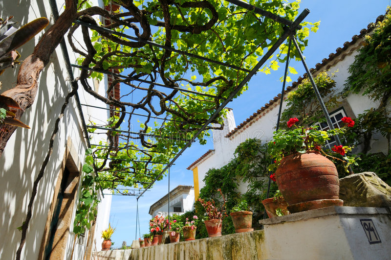 Pergola and grapevine royalty free stock images