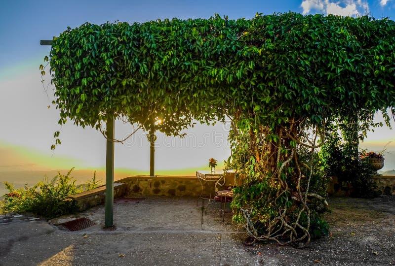 Pergola-klättring växter arkivfoto