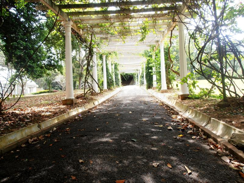 Pergola in Koninklijke botanische tuin royalty-vrije stock fotografie