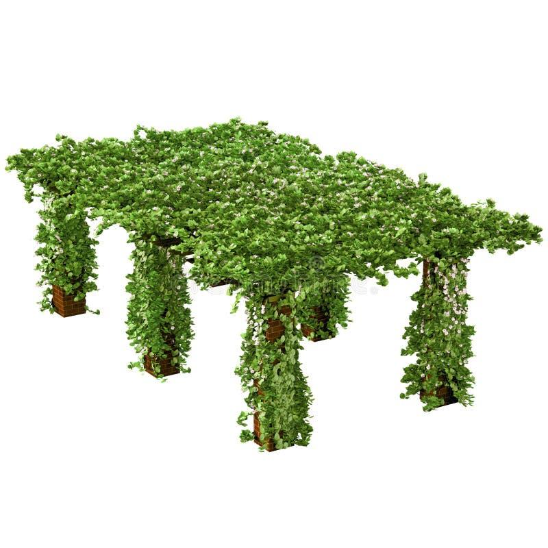 Pergola lunga ed alta con la pianta rampicante dell 39 edera for Edera rampicante