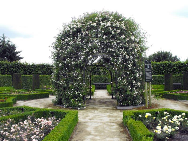 Pergola med vita rosor. royaltyfria bilder
