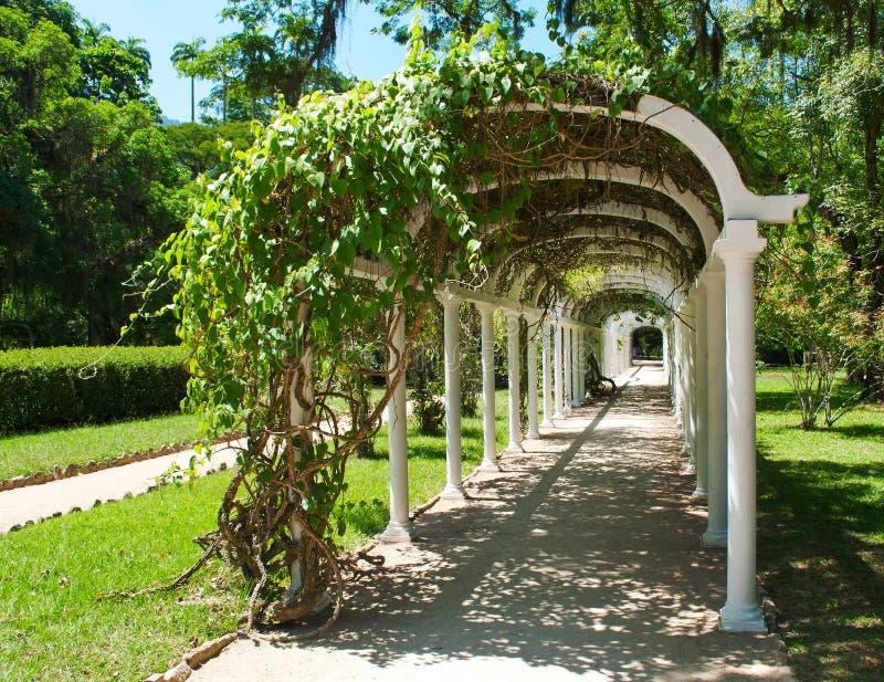 Pergola no jardim botânico em Rio de Janeiro imagens de stock