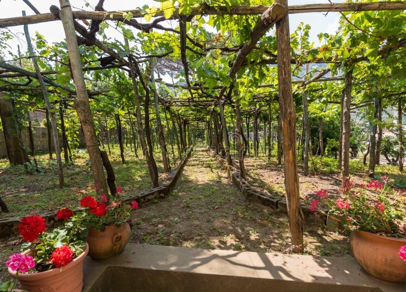 Pergola som täckas med vinrankor som ger skugga på varma dagar i Ravello, Amalfi kust royaltyfria foton