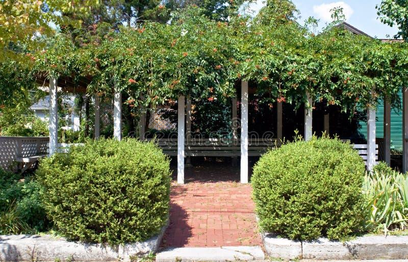 Download Pergola with Trumpet Vines stock photo. Image of plant - 11345048