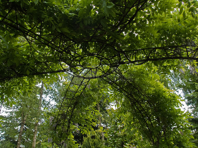 Pergola verde bonito do jardim fotografia de stock royalty free