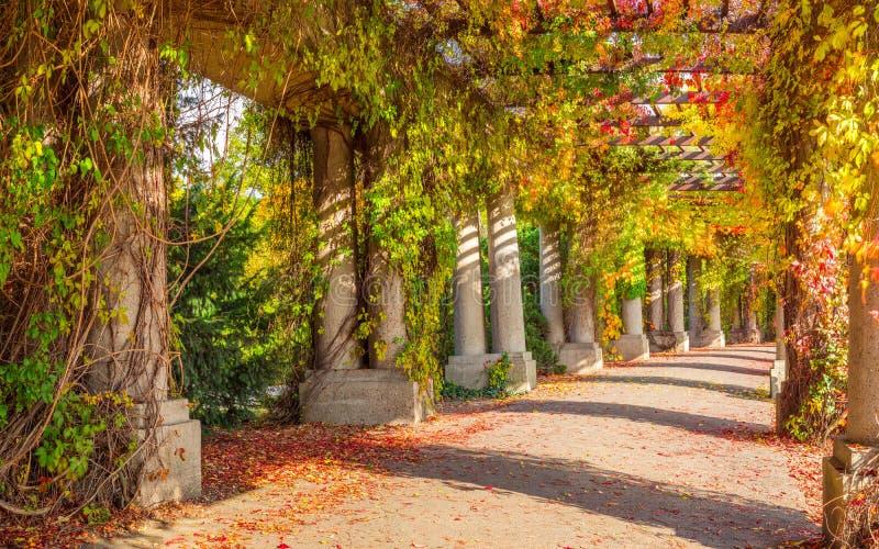 Pergolagang in park stock foto