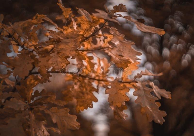 perguntar árvore galho amarelo folhas macro plano de fundo macro bokeh ao ar livre textura da floresta imagem de stock