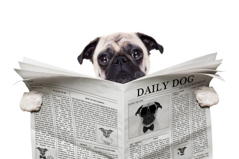 Periódico del perro foto de archivo libre de regalías