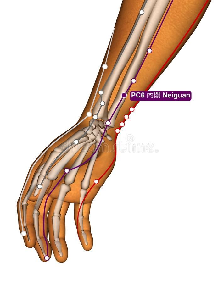 Acupuncture Point PC6 Neiguan, 3D Illustration royalty free stock images