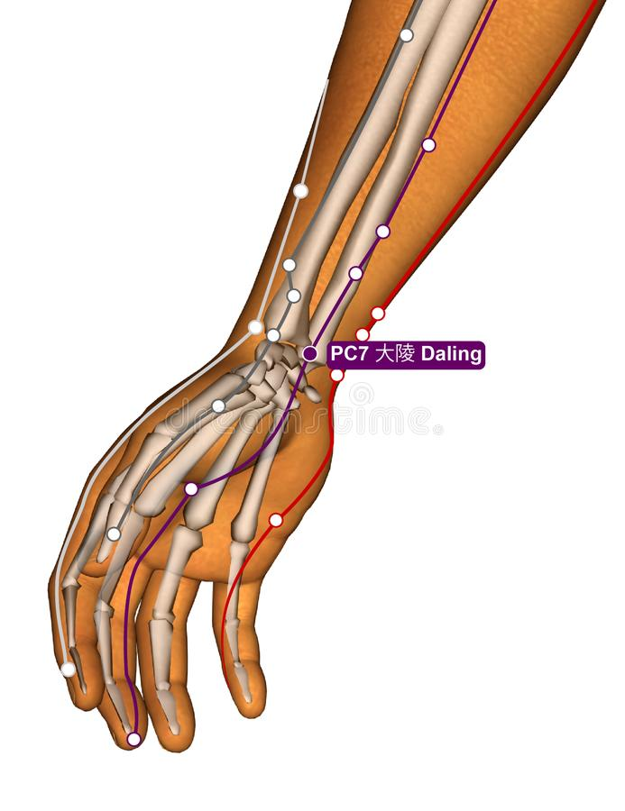 Acupuncture Point PC7 Daling, 3D Illustration stock photos