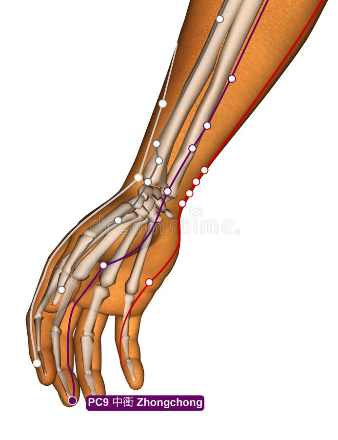 Acupuncture Point PC9 Zhongchong, 3D Illustration royalty free stock images