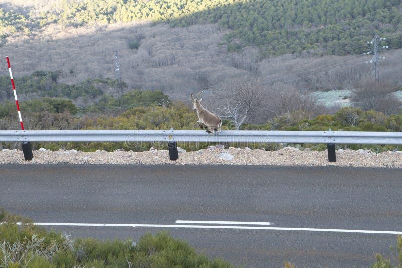 Perigo na estrada imagens de stock royalty free