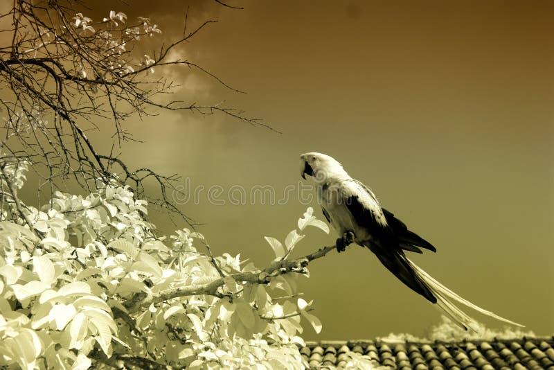 Periquito en el árbol, infrarrojo foto de archivo libre de regalías