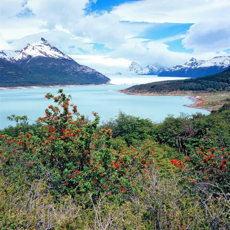 Perito Moreno Glacier, EL Calafate, parque nacional del Los Glaciares imagen de archivo
