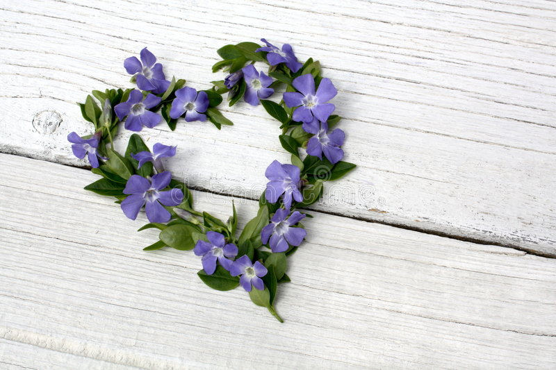Download Periwinkle floral heart stock photo. Image of group, artistic - 8963980