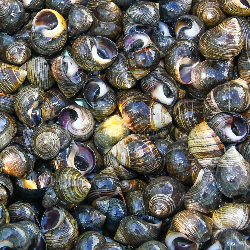 Periwinkles! stock images