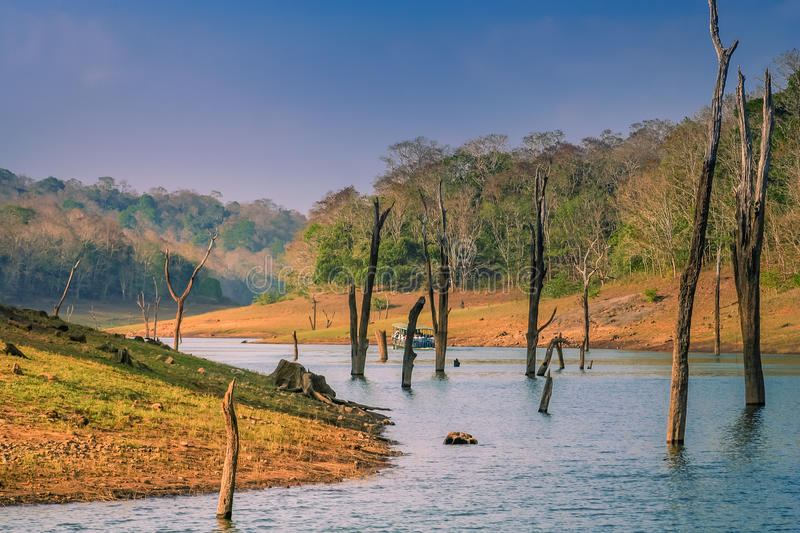 Periyar National Reserve royalty free stock photo