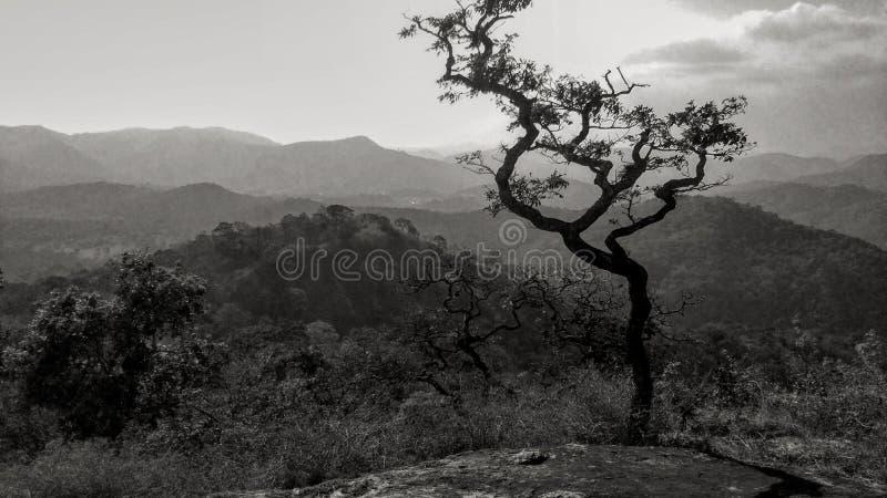 Periyar tiger reserve. Idukki district ,kerala , india royalty free stock photo