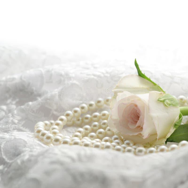 perl wzrastał obrazy royalty free