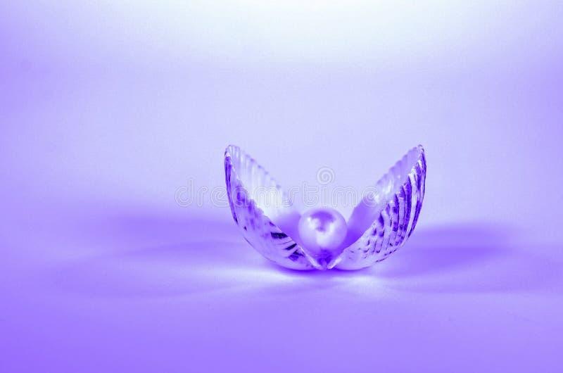 Perla en concha marina con pendiente púrpura fotos de archivo libres de regalías