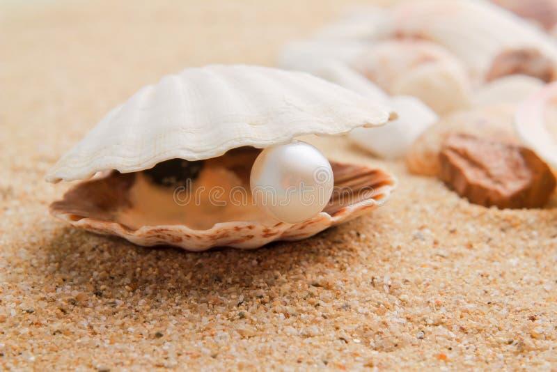 Perla en el seashell imagenes de archivo