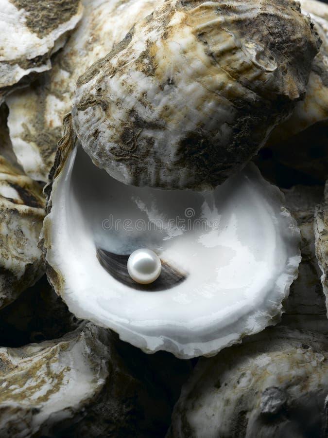 Perla en shell de ostra foto de archivo libre de regalías