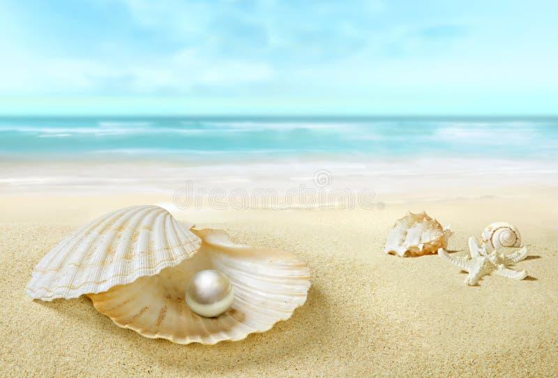 Perla en una c?scara abierta Playa tropical de Sandy fotografía de archivo libre de regalías