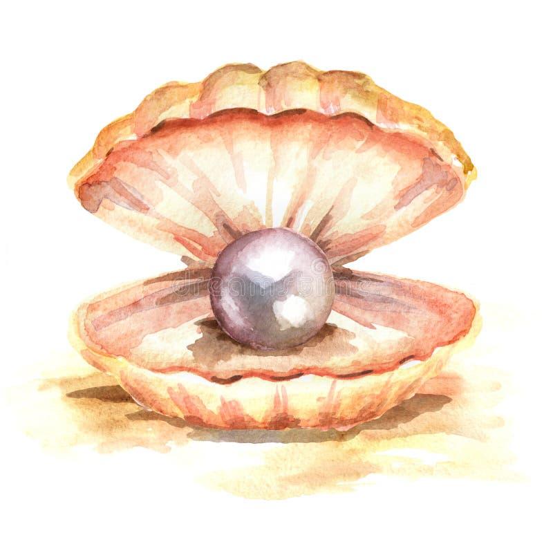 Perla nelle coperture Illustrazione disegnata a mano dell'acquerello, su fondo bianco fotografie stock libere da diritti