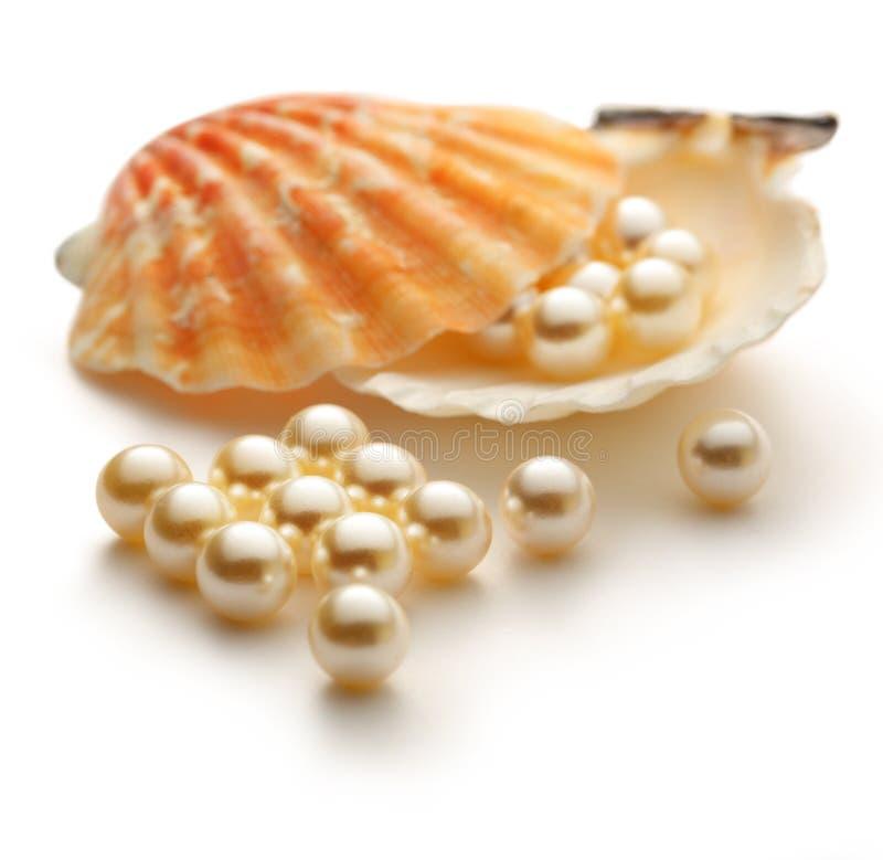 Perlas blancas en concha marina imagen de archivo libre de regalías