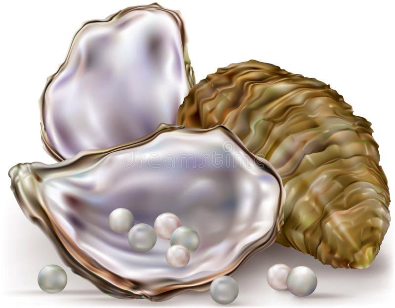 Perlas de la cáscara de ostra ilustración del vector