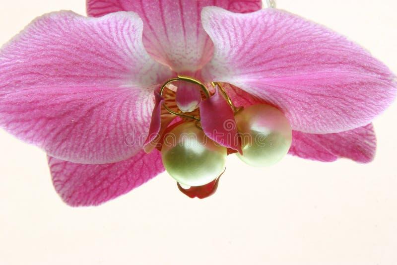 Perlas de la orquídea   imagen de archivo