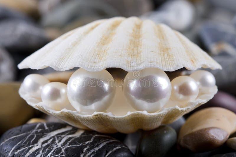 Perlas en el shell imagen de archivo