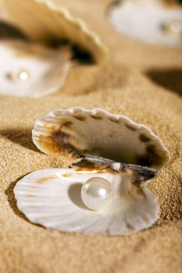 Perlas en los seashells fotografía de archivo