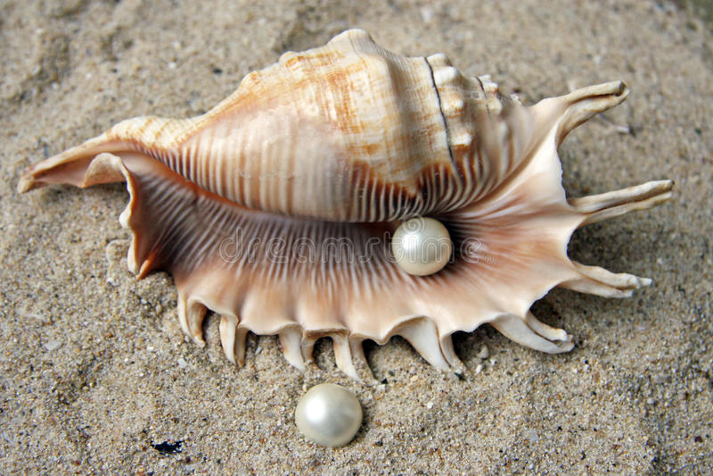 Perlas y shell fotografía de archivo libre de regalías