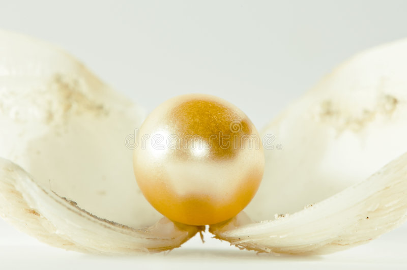 Perle lizenzfreies stockfoto