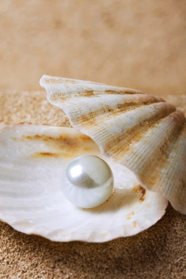 Perle auf dem Seashell lizenzfreies stockfoto